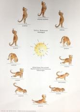 Sonnengruß-Poster A4